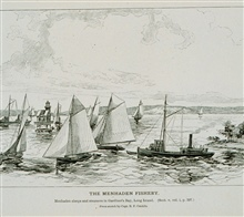 Menhaden sloops and steamers in Gardiner's Bay, Long Island.From a sketch by Capt. B.F. Conklin.