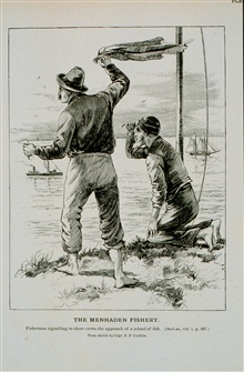 Fisherman signaling to shore crews the approach of a school of fish.From a sketch by Capt. B.F. Conklin.