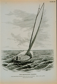 Carry-away boat with haul of fish on the way to oil factory.From a sketch by Capt. B.F. Conklin.