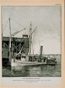 Menhaden steamer discharging catch at oil and guano factory, Tiverton, R.I.From a photograph by T. W. Smillie.
