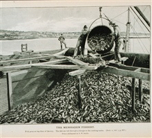 Fish pens on top floor of menhaden factoryThe fish are led through a trough to the cooking tanksFrom a photograph by T. W. Smillie.