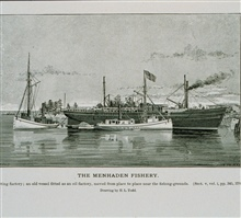 Menhaden floating factory.  An old vessel fitted as an oil factoryMoved from place to place near the fishing groundsDrawing by H. L. Todd