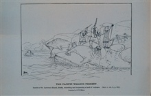 Innuits of St. Lawrence Island, AlaskaSurprising and harpooning a herd of walrusDrawing by H. W. Elliott