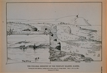 The North Rookery, looking west to Starry AteelSaint George Island, village of Saint GeorgeDrawing by H. W. Elliott