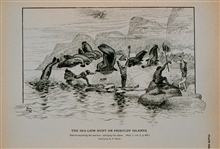 Natives capturing the sea-lion; springing the alarmDrawing by H. W. Elliott, 1873