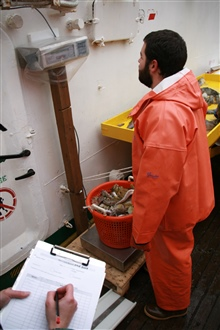 An AMLR scientist weighs catch from a fish trawl.