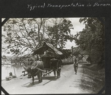 Carabao provided transportation in Borneo.