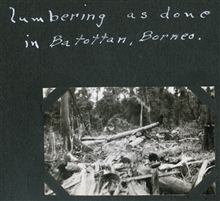 Destruction caused by logging at Batottan.