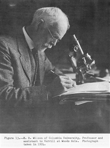 Edmund B. Wilson of Columbia University, Professor and assistant to Verrill at Woods Hole.  (1856-1939).  A cytologist and early advocate of the chromosomal theory of inheritance.  P. 25.The Story of the BCF Biological Laboratory Woods Hole, Massachu