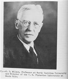 H. V. Wilson, Professor at North Carolina University and Director of the U.S.Fisheries Laboratory at Woods Hole.  P. 56.The Story of the BCF Biological Laboratory Woods Hole, Massachusetts, by P. S.