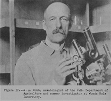N. A. Cobb, nematologist of the U.S. Department of Agriculture and summerinvestigator at Woods Hole Laboratory.  P. 76.The Story of the BCF Biological Laboratory Woods Hole, Massachusetts, by P. S.