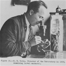 O. E. Sette, Director of the Laboratory in 1929, examining larval mackerel.  P.82.The Story of the BCF Biological Laboratory Woods Hole, Massachusetts, by P. S.