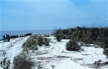 Area 2; a northwest view of the beach and dunes.