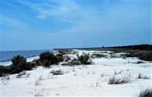 Between areas 1 and 2, a northwest view of the beach and dunes.