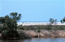 A view of the Gulf of Mexico from Mobile Canal, the rock is on the beach in thebackground.