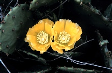 A close-up of a flowering cactus.