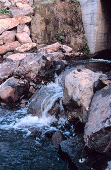 Water flows over the fish-step pools.