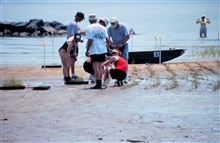 Volunteers plant smooth cordgrass, Spartina alterniflora, as part of therestoration work at the Eastern Neck Refuge.