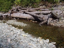 A channel beginning after a log jam was created in the stream.