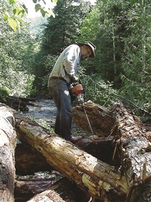 A member of the Skagit Fisheries Enhancement Group cuts holes to place cablein the logs. US Forest Service and Skagit Fisheries Enhancement members cabledall the jams into place. Then, volunteers played an essential role in therestoration by performi