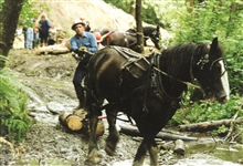 A single draft horse pulls wood to the restoration site at the Glade Bekkenwatershed.
