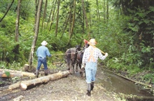 Two men drive their horses into the stream to drop wood off at the restorationstaging site.