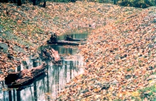 A close-up image of restored channel with woody debris in-stream.
