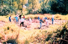 A group of volunteers, on site, place a hemp blanket and plant Willow andRed Oiser Dogwood on the banks of the restored areas.