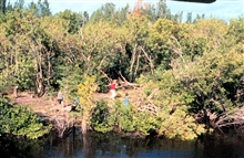 This image shows the area cleared during the restoration. Mangroves are in theforeground.