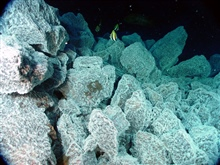 Pacific Ring of Fire Expedition. At East Diamante volcano (195 m water depth),tropical fish swim above boulders covered with bacterial mat, which indicatesthe presence of hydrothermal venting. These fish live in thereef community above and are about