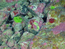 Pacific Ring of Fire Expedition. Photosynthetic green and red algae is growingon the same rocks as chemosynthetic bacterial mat near the top of East Diamantevolcano.  Usually, these two life forms are not found together because onedepends on the sun