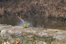 A close up view of the pond above the dam removal site.