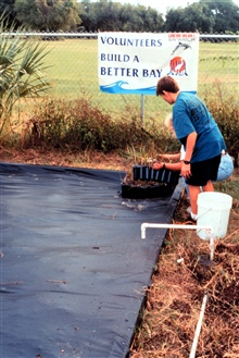 This image shows construction of a new wetland nursery at a St. Petersburghigh school. The donor plants are brought to the nursery and then used inrestoration projects. The nursery ponds are lined with plastic to hold in saltwater and nutrients.