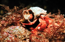 Hermit crabs are very particular about their shell homes.