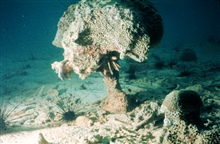 Bioerosion of coral reefs makes them brittle and susceptible to collapse.