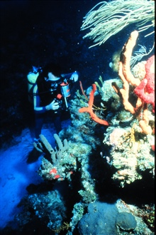 Scientists study reefs for many reasons, economic and ecologic.