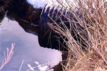 A close - up of the culvert that will be replaced to enhance anadromous fishhabitat.