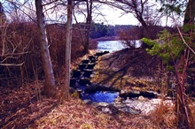 An historic anadromous fish ladder that leads from Quivett Creek to theheadwater pond where alewives spawn.