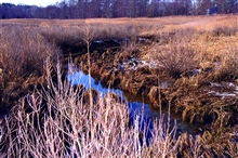 A winter view of Quivett Creek, on the Brewster/Dennis line. Restoration isexpected fall 2002.