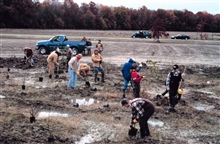 Workers plant shrub species in the emergent wetland area, note the still activefarm in the background.
