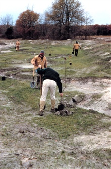 Volunteers plant near the newly restored stream bank where meanders have beenadded.