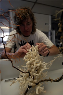 Martha Nizinski, a scientist from the NMFS Systematics Laboratory,closely examines a piece of Lophelia. She hopes to learn moreabout the types of marine organisms that live in and aroundthe deep-sea corals.