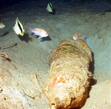 Reef fish deep on Bright Bank.  Beehive type structure appears to be sponge.