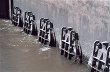 A close-up view of the tide gate from the Delaware River side shows the flatvalves near low tide. The water is flowing out of Army Creek, the tide gatesare open and debris that plugs the openings can be clearly seen. The restorationwork will target m