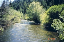 An image of the middle section of Panther Creek.