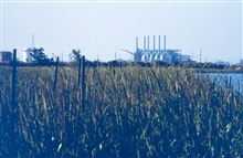 Newly planted marsh grass thriving in this highly industrialized area.