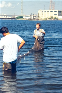 Scientists seine netting for small biota to test health of fish and otheranimals.