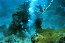 One diver prepares to attach coral, another diver works using surface suppliedair.