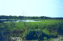 Padanaram Marsh, Dartmouth MA. One of the areas selected for restorationduring the round 1. Restoration was conducted to improve tidalflushing at the marsh.