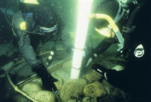 A suction sampling technique is used to determine settlement of lobsterson the reefs.